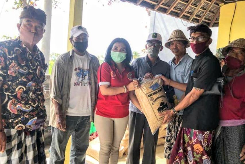 DPRD Bekerja Sama Dengan Dinas Pertanian & Holtikultura Gianyar Serahkan 750 Kg Bibit Padi Cigelis