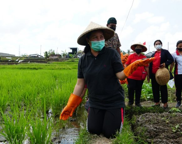 Melalui Program Pekarangan Pangan Lestari, Ny. Seniasih Giri Prasta Intensifkan Peran KWT Berdayakan Potensi Pekarangan