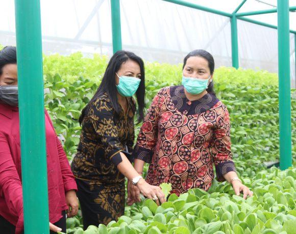 Ny. Seniasih Giri Prasta Harapkan Masyarakat Kembangkan Konsep Pertanian Hidroponik