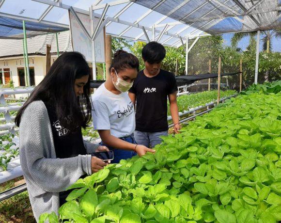 PLN Bali Dorong Masyarakat Manfaatkan Hidroponik