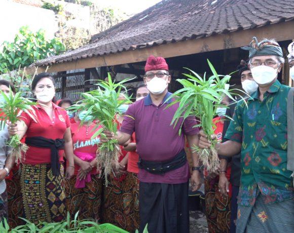 Made Urip Bersama Rahayuni Panen Perdana Di KWT Gunang Lestari, Contoh Nyata Keberhasilan Program P2L